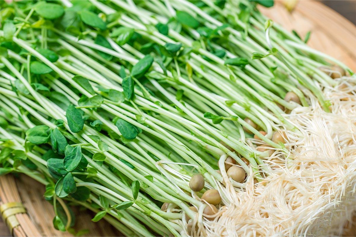 食べまき菜園におススメの野菜や果物の種